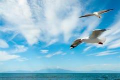 在Chalkidiki半岛的美丽的海滩 库存照片