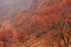 在Chandalaz冠的秋天 库存图片