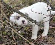 在chaparell的哀伤的被放弃的小狗 免版税库存图片