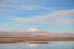 在Chaxa盐水湖的弗拉门戈队 库存照片