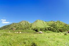 在Chemal附近的山骆驼 阿尔泰共和国,俄罗斯 免版税库存图片