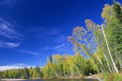 在Chena河河岸的树  免版税库存照片
