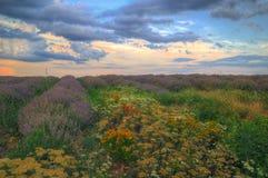 在Cherven bryag,保加利亚附近的淡紫色领域 免版税图库摄影