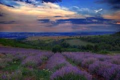 在Cherven bryag,保加利亚附近的淡紫色领域 免版税库存图片