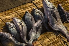 在chiclayo -秘鲁的皮门特尔海滩 免版税库存照片