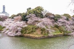 在Chidorigafuchi护城河,千代田,东京,日本的樱花在春天 免版税图库摄影