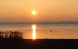 在Chiemsee湖和两只天鹅的日落 免版税库存照片