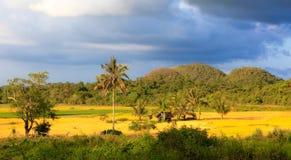 在Chocolat小山之间的Ricefields 库存图片