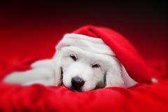 在Chrstimas帽子的逗人喜爱的白色小狗睡觉在红色缎的 免版税库存图片