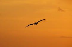 在clearwater海滩佛罗里达的日落 免版税库存图片