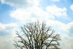 在cloudscape下的树梢 库存图片