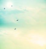 在天空的蝴蝶 免版税图库摄影