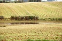 在Co.Cork的秋季风景领域,爱尔兰。 免版税库存照片