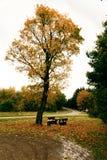 在Cochum的风景路 库存图片