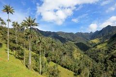 在Cocora谷的蜡榈树风景在Salento,哥伦比亚附近 图库摄影