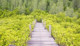 在Coldwater湖的走道 免版税库存图片