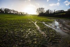 在Combe谷,东萨塞克斯郡的早期的春天被排泄的浸满水领域 免版税库存照片