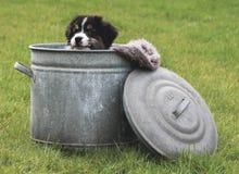 在cookiejar的小狗 免版税图库摄影