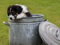 在cookiejar的小狗 免版税库存图片