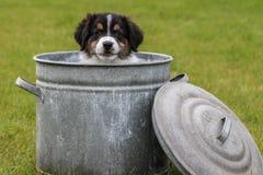在cookiejar的小狗 免版税库存照片