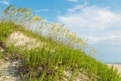 在Coquina海滩的高海滩草在老马头 免版税图库摄影