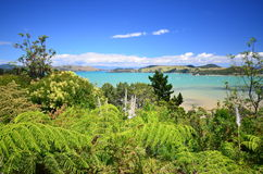 在Coromandel半岛的热带植被 库存图片