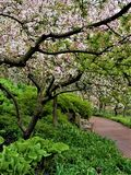 在Crabapple开花中的安静的道路 免版税库存照片