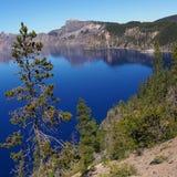 在Crater湖的树 库存图片