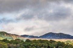 在Crieff苏格兰上的沉思的苏格兰山坡 免版税库存图片