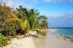 在Culebra海岛,波多黎各上的佛拉明柯舞曲海滩 库存图片