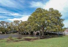 在Currituck遗产公园的脚桥梁 库存照片