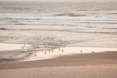 在D河的海鸥 图库摄影