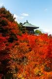 在Daisho在寺庙的秋季槭树在宫岛(Itsukushim 库存照片