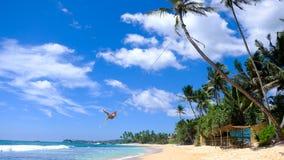 在DALAWELLA海滩的棕榈树绳索摇摆 免版税图库摄影