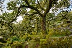 在Dartmoor的Wistman的木头 免版税库存照片
