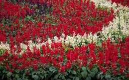 在Dasada画廊,Prachinburi,泰国的五颜六色的花显示 免版税图库摄影