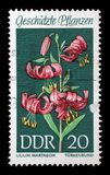在DDR打印的邮票东德显示被保护的植物Martagon百合,百合属植物martagon 免版税库存图片
