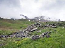 在de vars col的黄色花在法国阿尔卑斯在欧特普罗旺斯 库存照片