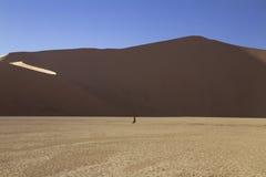 在Deadvlei的古老金合欢在Sossusvlei, Namib附近 库存照片