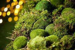 在defocused bokeh背景的绿色青苔 免版税库存图片
