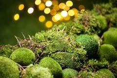 在defocused bokeh背景的绿色青苔 免版税图库摄影