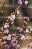 在Descanso庭院的美丽的花开花 库存照片