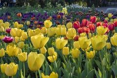 在Descanso庭院的美丽的花开花 库存图片