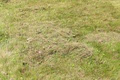 在dethatching的草坪在春天以后 免版税图库摄影