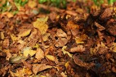 在dicember,秋天背景,关闭的干燥叶子 免版税图库摄影
