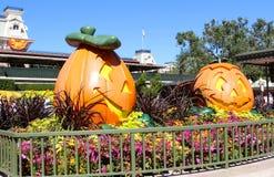 在Disneyworld的万圣夜装饰 免版税库存图片