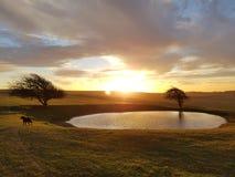 在Ditchling烽火台露水池塘的冬天日出 免版税图库摄影