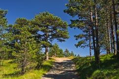 在Divcibare山的森林道路 库存照片