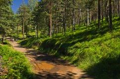 在Divcibare山的森林道路 库存图片