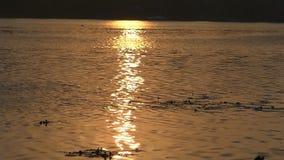 在Dnipro河岸的美好的日落与金黄Sunpath在夏天 影视素材